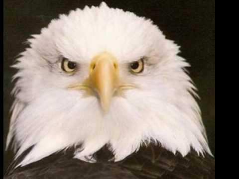 "American National Symbols The Eagle ""Symbol..."