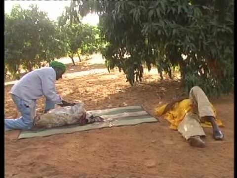 Nourou -ABATOIRE Niamey