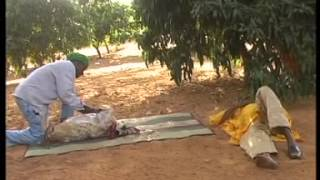 ABATOIRE niamey