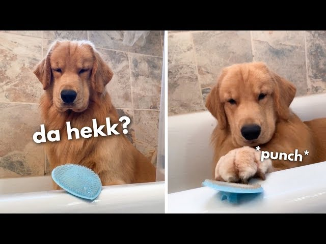 My Dog Reacts to Face Scrubber thumbnail