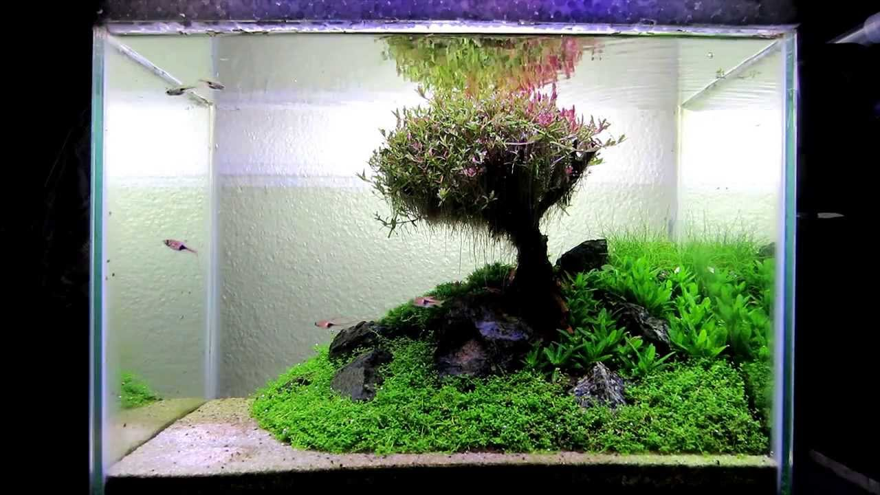 My Aquascape Quot Our Lovely Tree Quot 28l Youtube