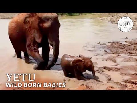 Yatta's first born wild calf