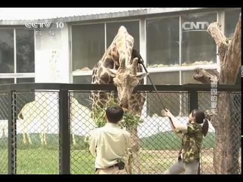 「小科」的動物世界 動物園的夏天 走近科學 20140909