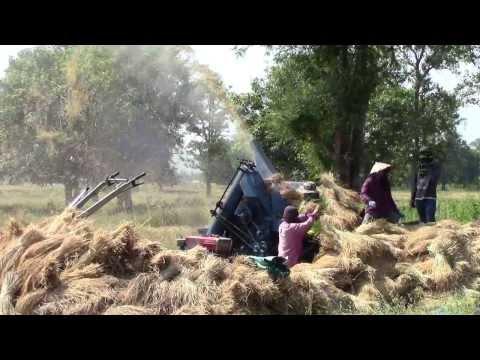 A scene of harvest time in Savannakhet, Laos - rice threshing