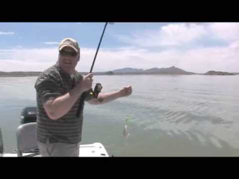 Travel Guide New Mexico tm, Striper Fishing, Elephant Butte Lake in Elephant Butte, New Mexico