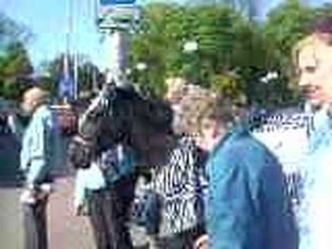 Лошадь-зебра в Калининграде
