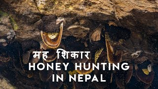 Mad Honey Hunters Of Himalayas | Scaring Documentary |