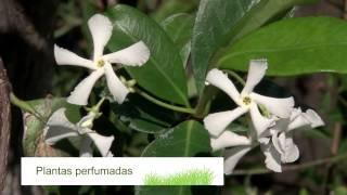 Curso de jardinería y paisajismo 2014 - jardin urbano