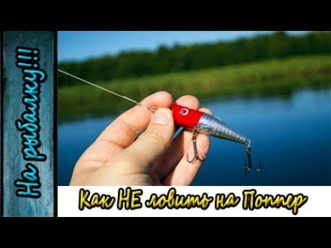 все о рыбалке на щуку с поппером