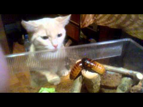 Кошка и Тараканы