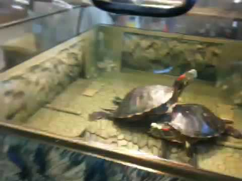 Turtle Topper! by Reptology at Polly's Pets