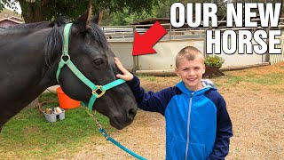 Horse Grooming and Riding Lessons!! || Mommy Monday
