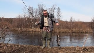 Форель весной. Заповедная речка / A journey on the forest-tundra river