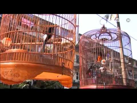VTC14_Những khoảnh khắc bình yên với thú chơi chim cảnh