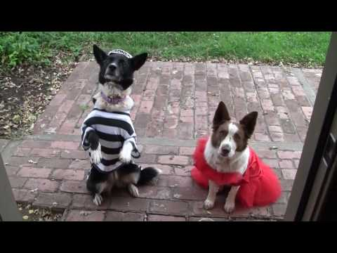 Happy Halloween Dog Story - Busy Bee Dogs