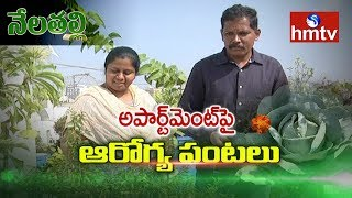 Terrace Gardening By Farmer Couple Neelima And Ravi In Hyderabad | Nela Talli | hmtv