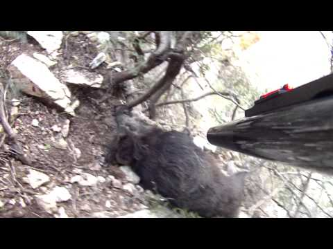 Caccia al Cinghiale a Baunei 26.01.2014