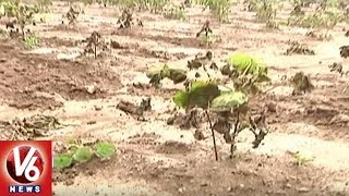 Heavy Rains Lashes Adilabad, Farmers Demand Compensation For Crop Loss