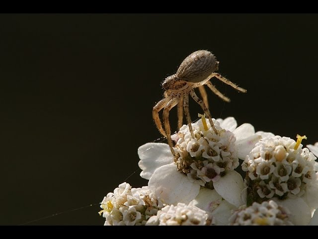 """In the Sky """"ballooning"""" or """"floating"""" webs made by young migrating spiders."""