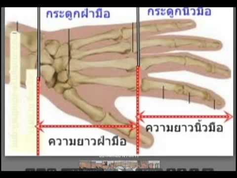 เรียนลายมือบทที่ 3. 1 โครงสร้างของมือ