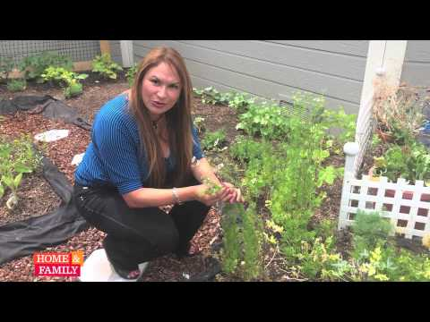 Need to keep your Cilantro growing? @edenmaker shows you how!