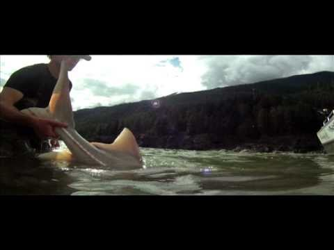 Sturgeon Fishing British Columbia