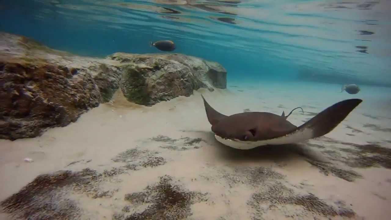 Discovery Island Florida