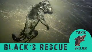 Dog abandoned paralyzed in the sea. Everybody told him to put it down- Black's Story - Takis Shelter
