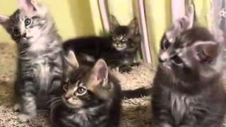 [kittens students] Video