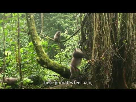 The Drill Project (El Proyecto del Mono Dril)