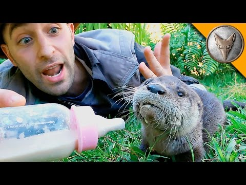Baby Otter Feeding Time!