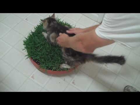 Plants that deter cats from yard