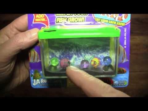 Activities  (Magic Grow Aquarium)