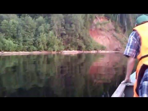 Лоси на реке Обва//Elks on the river Obva