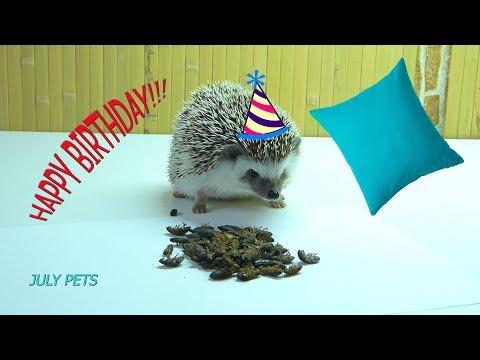 УРА! День рождения ЧИЖУНИ) ЕЖУ 2 Года!!!