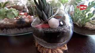 Designer Terrariums - Greenpiece Kochi - Matrix | Tv New