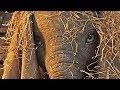 Disney's Dumbo | official trailer #1 (2019)