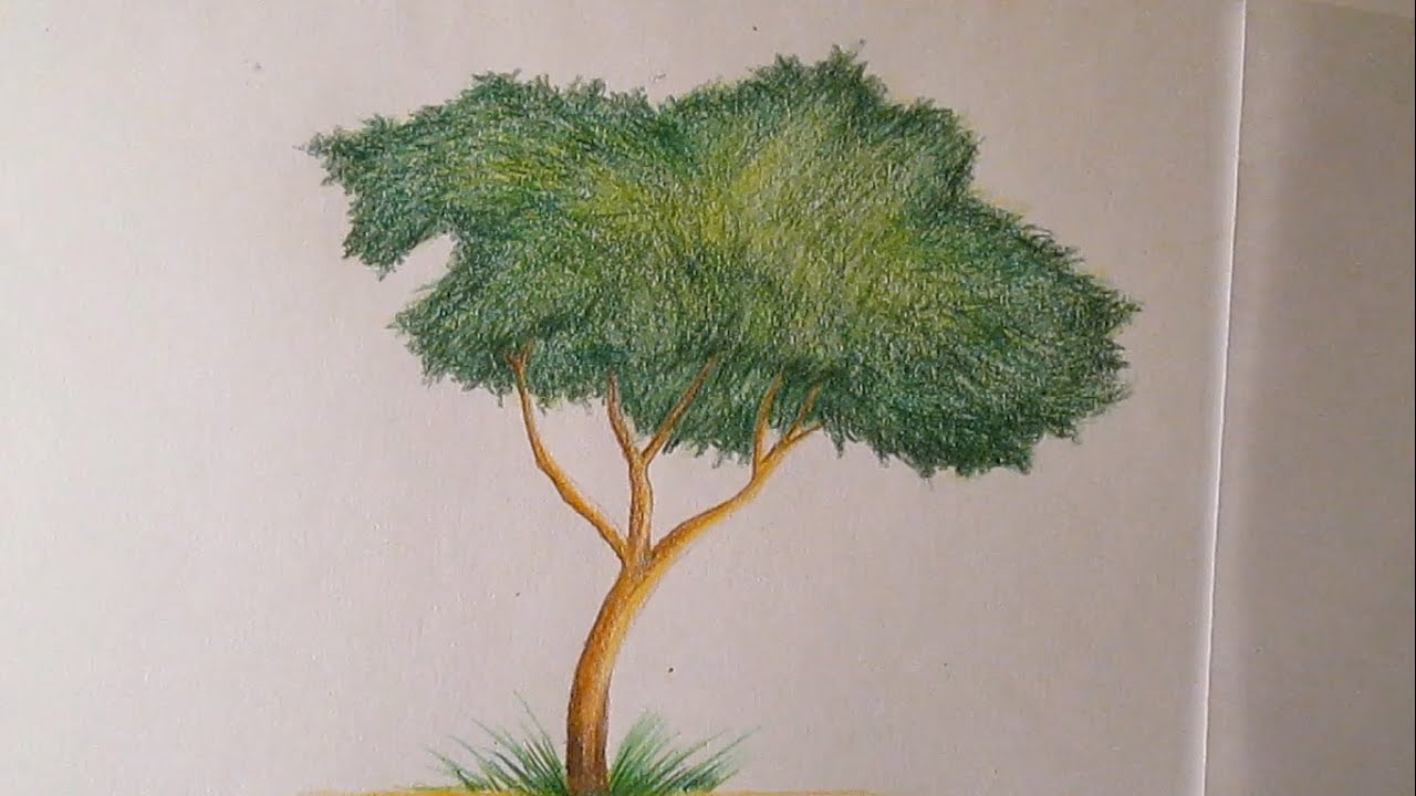 C mo dibujar un rbol con l pices de colores paso a paso - Como pintarse bien ...