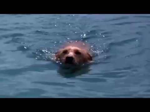 Дельфин и собака ...... Настоящая дружба!