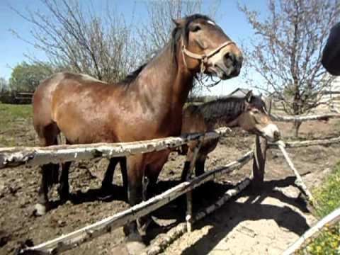 Смотрите на poltava-city лошадка ебать лошади ебут негретянок племена ебут негретянок