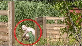 3 Scary Things Caught On Camera. Ghost or strange creature ?