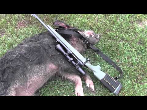 Savage Hog hunter - hog head shot