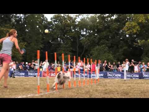 Zawody Dog Chow Disc Cup - Baltic Agility Team