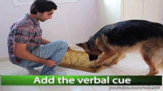 Dog Trick Tutorial: Clean Your Paws!