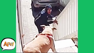 Play this video Barking Down the FAIL! р  Funny Security Fails  AFV 2021