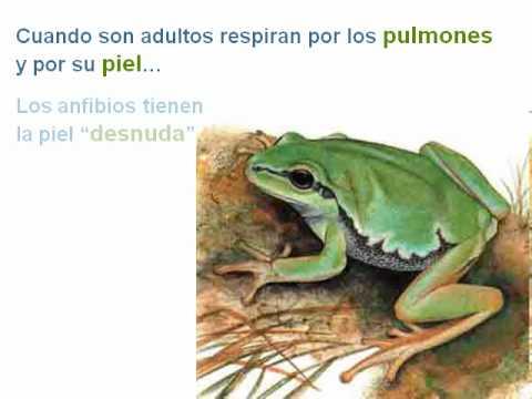 ANIMALES_Los anfibios.avi