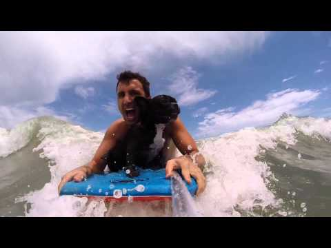 GOPRO - ROCO LOCO - French bulldog SURFING! bodyboarding and catching WAVES!!!