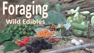 Foraging Wild Food -Survival Texas-