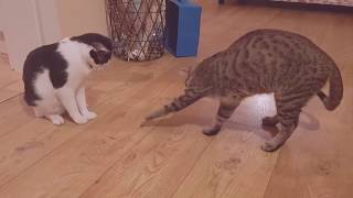 Bug vs cat vs dog funny video! Funny moments of a bug caught by two cats and a dog!