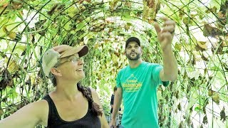 What it REALLY takes to grow your own food | Living Traditions Homestead Tour
